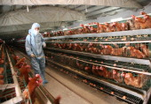 A health worker sprays disinfectant at a poultry farm on April 17 2013 in Baofeng China China has reported 77 cases of H7N9 avian influenza including...