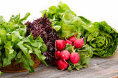Healthy fresh salad ingredients displayed on old weathered wooden boards with several varieties of leafy green lettuce and a bunch of crisp peppery radish over a white background with copyspace