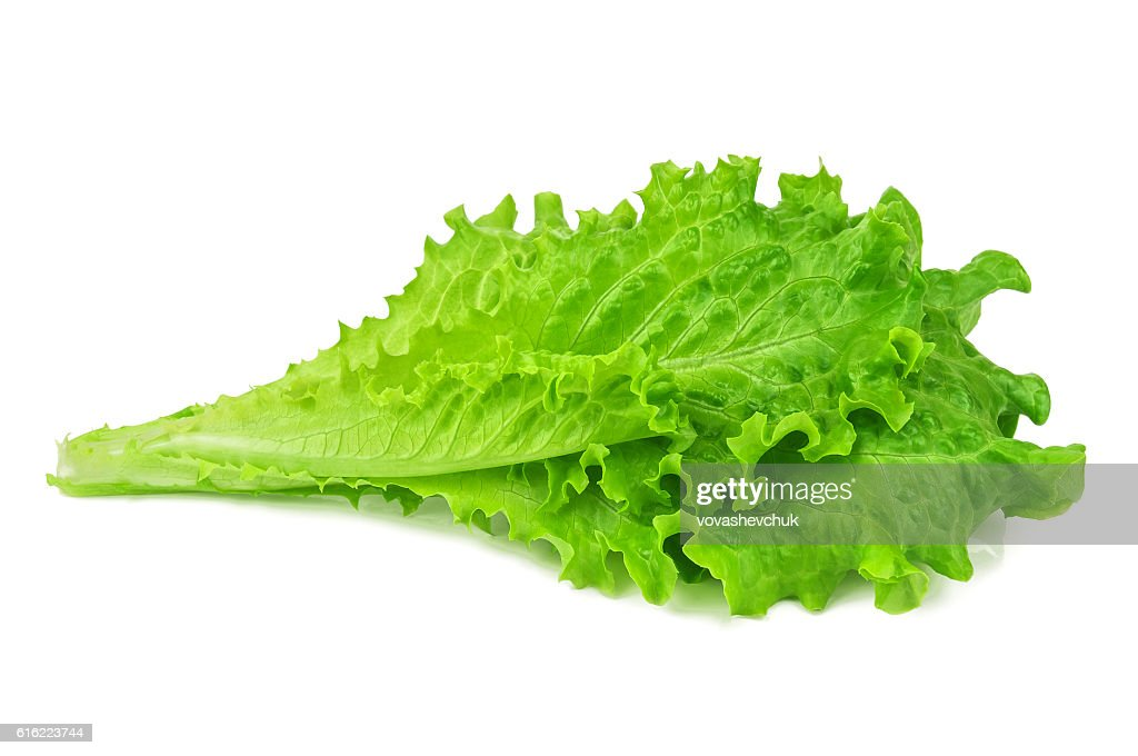 healthy green lettuce : Stock-Foto