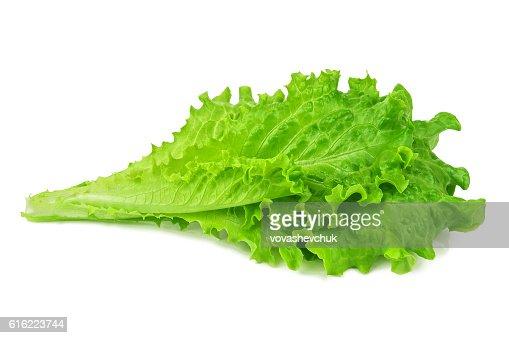 healthy green lettuce : Foto stock