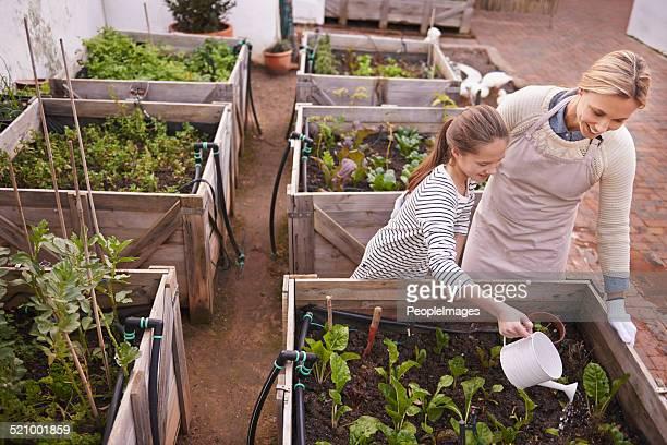 Healthy living through organic gardening