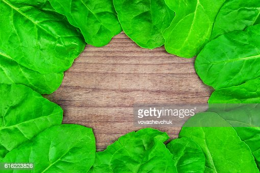 healthy spinach texture : Stock Photo