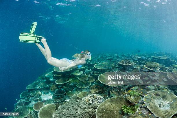 Healty Reef and Skin diver Ellaidhoo House Reef North Ari Atoll Maldives