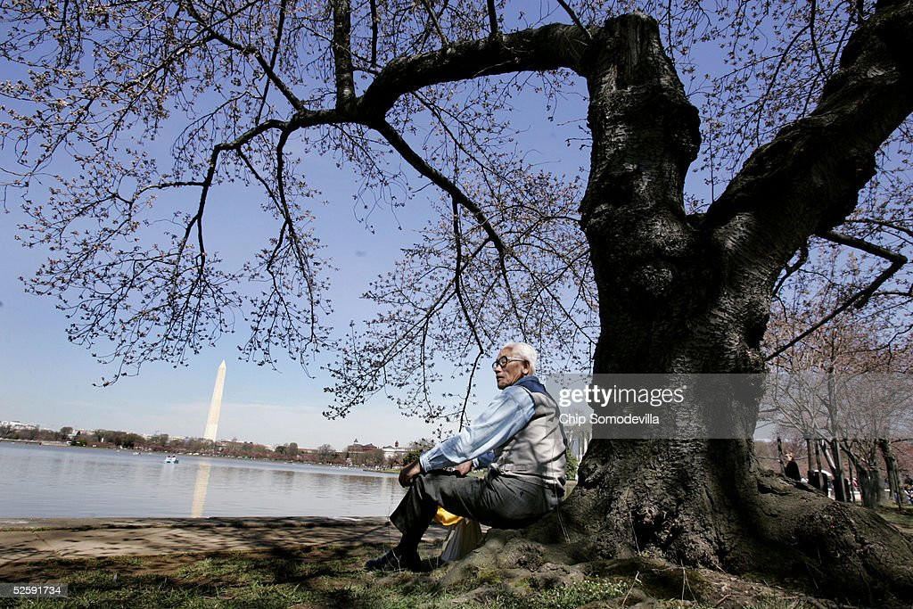 Heang Man An, 76, of New York City, rests underneath one of the cherry trees that circle the Tidal Basin which began to bloom April 5, 2005 in Washington. The National Cherry Blossom Festival -- a celebration to commemorate the 1912 gift of 3,000 Yoshino cherry trees from Japan -- will run until April 10.