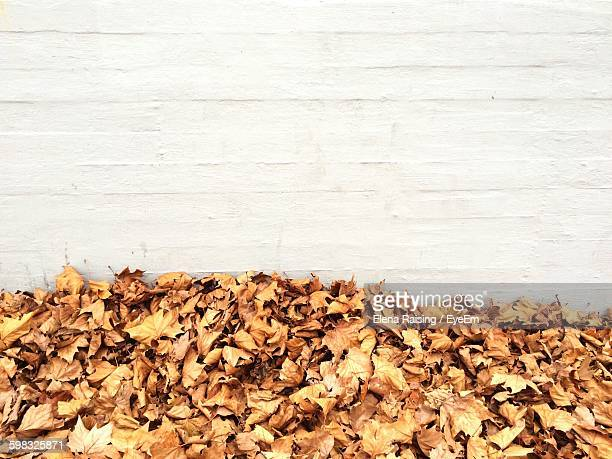Heap Of Autumn Leaves By Wall