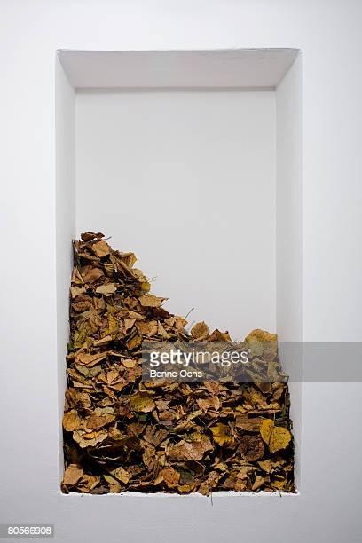 A heap of dead leaves on a shelf