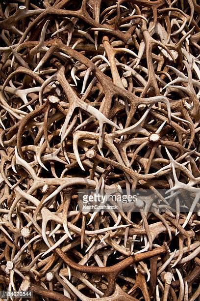 Heap of Elk Antlers