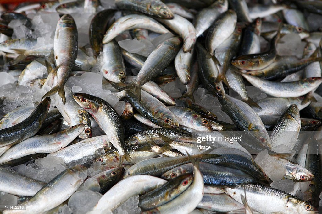 A heap of fish : Stock Photo