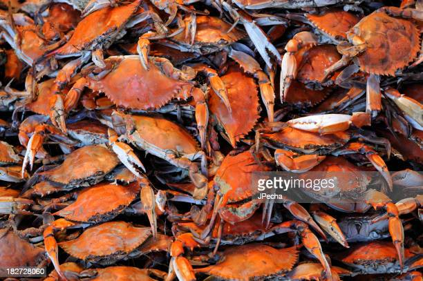 Heap of freshly Steamed Blue Crabs ready to eat