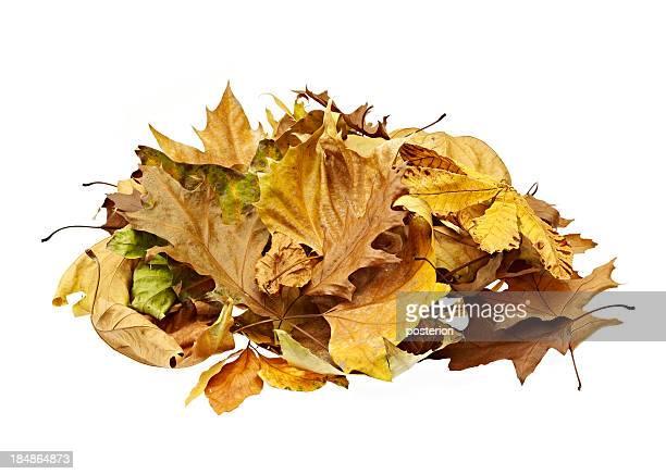 heap of leafs