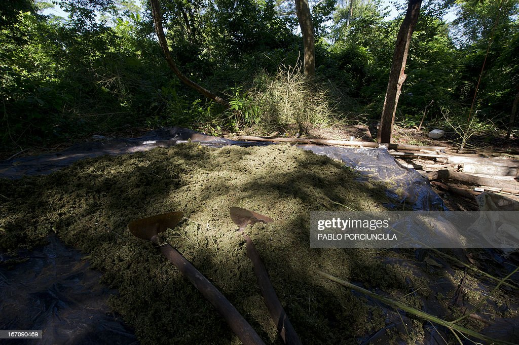 A heap of marijuana found at an improvised camp set into the woods in Pedro Juan Caballero (border with Brazil) 550 km northeast of Asuncion on April 19, 2013. AFP PHOTO/Pablo PORCIUNCULA
