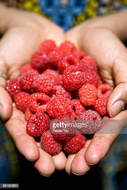 A heap of raspberries in cupped hands
