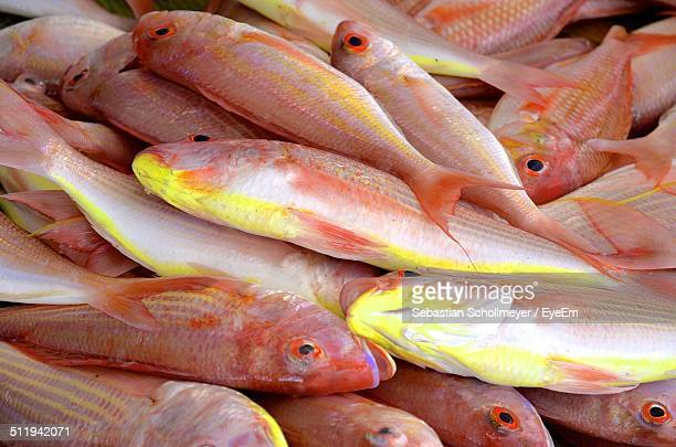 Heap of Red snapper fish for sale at fish market
