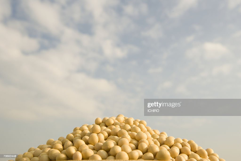 Heap of soybeans, close-up : Stock Photo