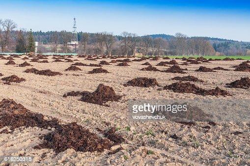 heaps of manure : Foto de stock