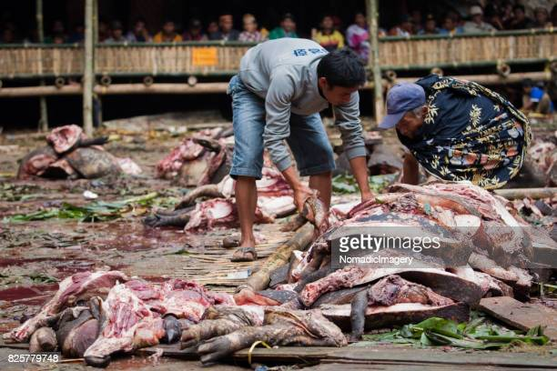Heaps of Pig meat at animal sacrifice ceremony in Toraja
