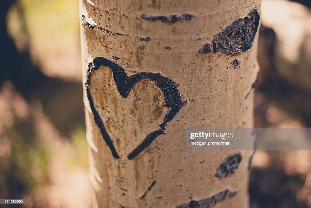 Heart carved in aspen tree stock photo getty images