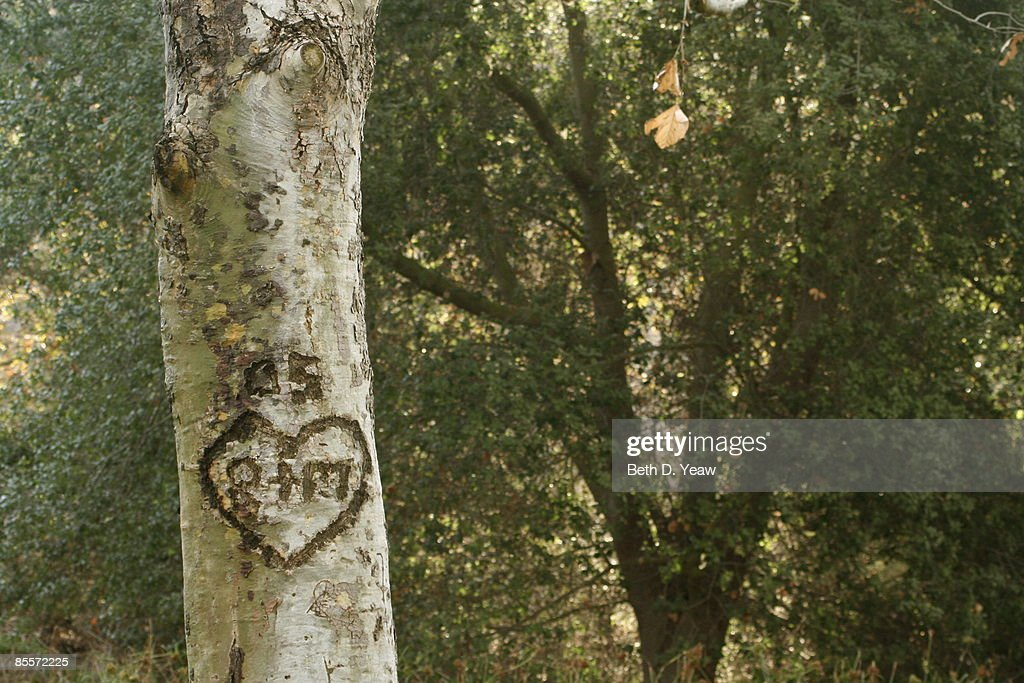 Heart carved in to a tree trunk in a wooded area