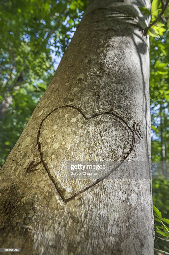 Heart carved in tree