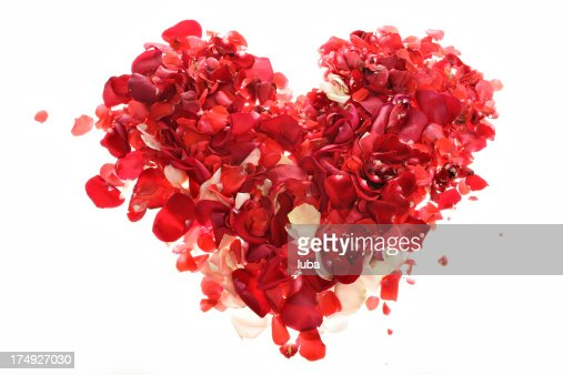 heart made of roses : Stock Photo