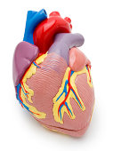 Heart model w/clipping path