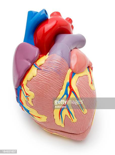 Heart-Modell mit clipping path
