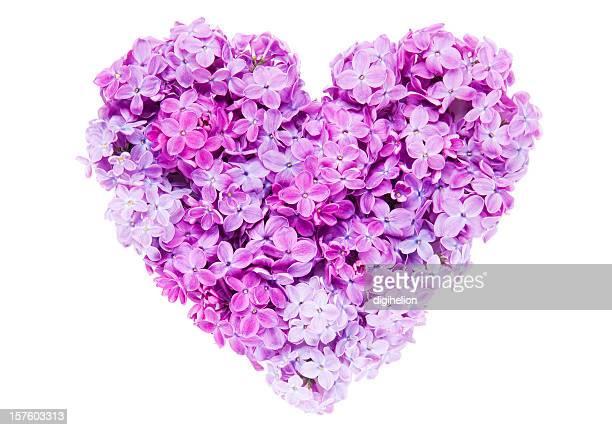 Corazón de las flores de una lila magenta