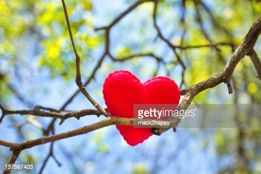 Heart on branch with leaves and sky background : Stock Photo