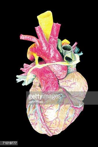heart : Stockfoto