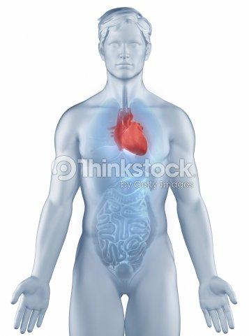 Heart Position Anatomy Man Isolated Stock Photo   Thinkstock