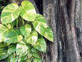 popular ornamental plants grown for tropical garden decor