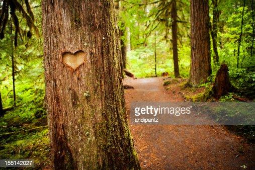 Símbolo do coração muito finos esculpidos em uma árvore ao longo de um caminho de floresta