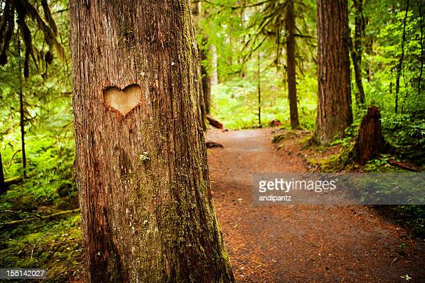 Heart shape carved into a tree along a forest path