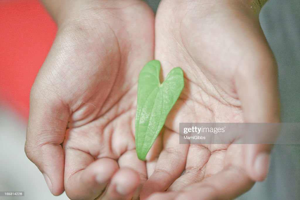 Heart shape leaf in her's hand : Stock Photo
