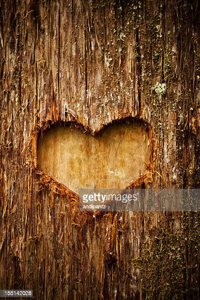 Heart shape of love on a tree in the forest