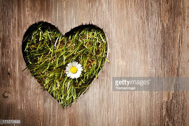A forma di cuore in legno erba Daisy
