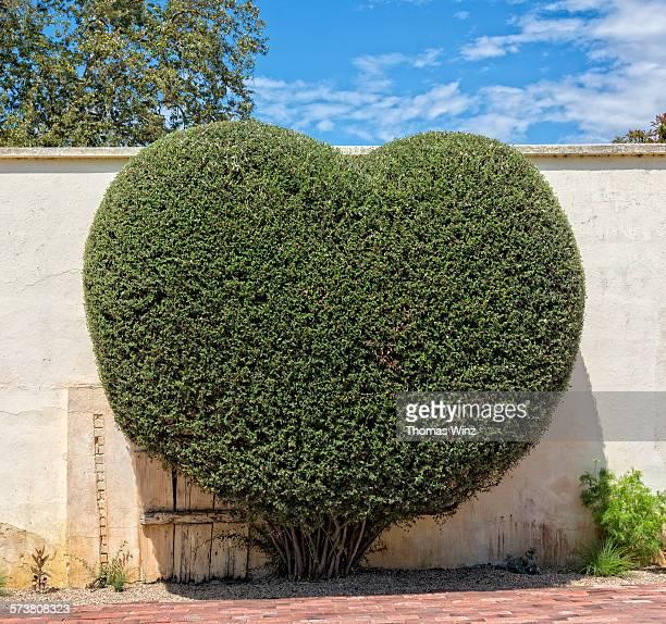 Heart shaped Bush