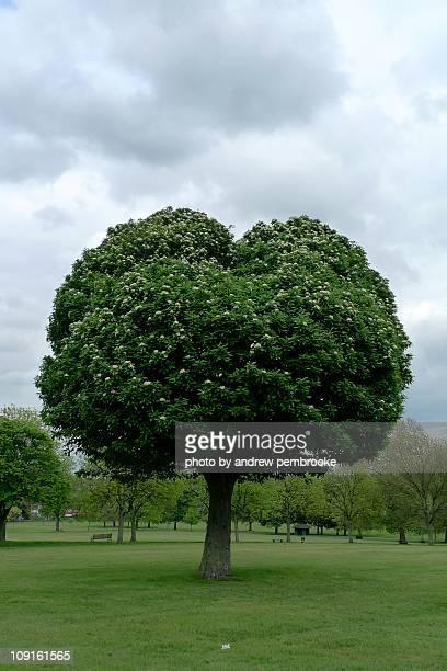 Heart shaped love tree