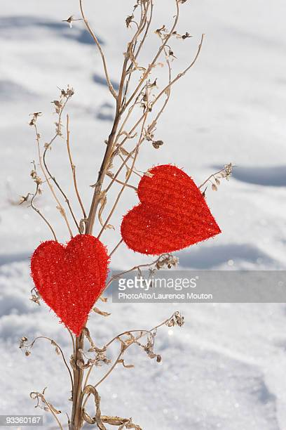 Heart shaped ornaments on dried plant stalk
