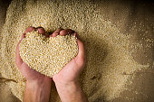 Quinoa superfood organic whole grain in cupped hands with copy-space.