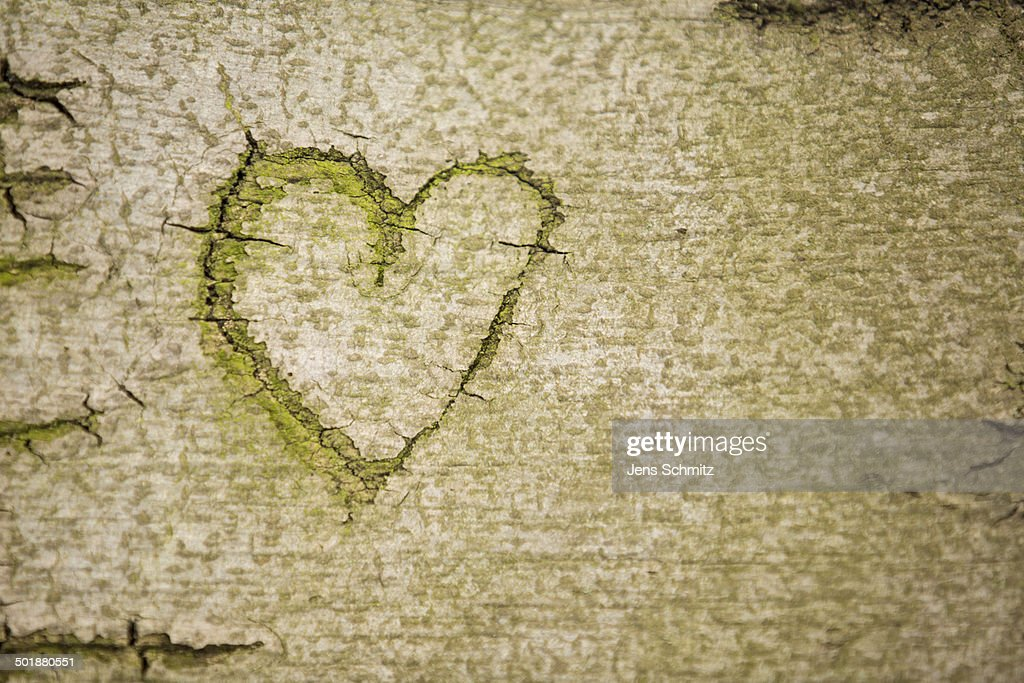 Heart symbol carved into the bark of a beech tree, Cologne, Rhineland, North Rhine-Westphalia, Germany