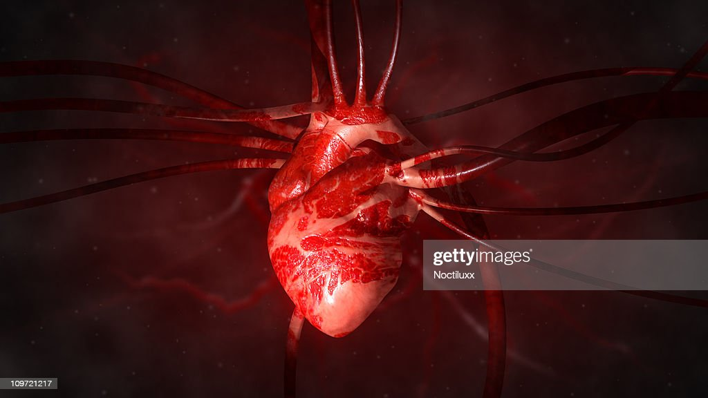 Heart with arteries and veins : Stock Photo