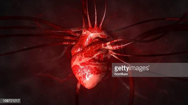 Cuore con le arterie e vene