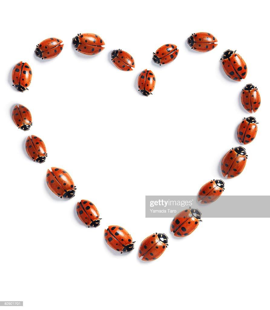 Heart with ladybugs : Stock Photo