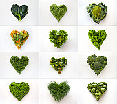 Heart-shaped formed by fresh vegetables