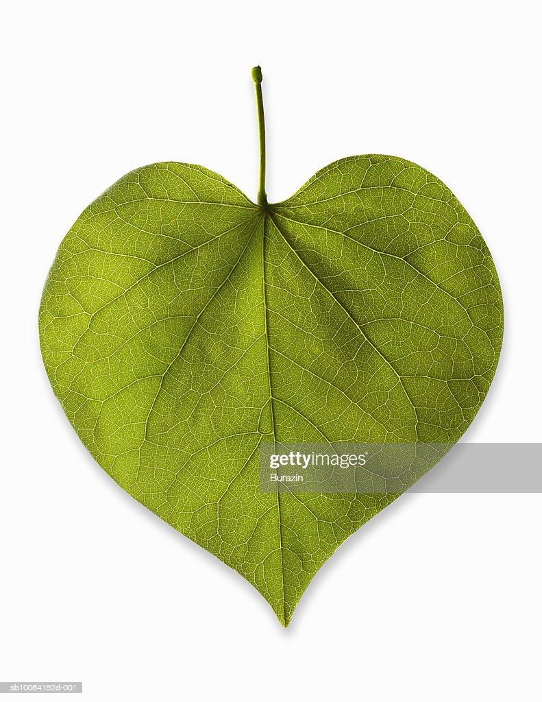 Heart-shaped leaf on white background, studio shot : Stock Photo