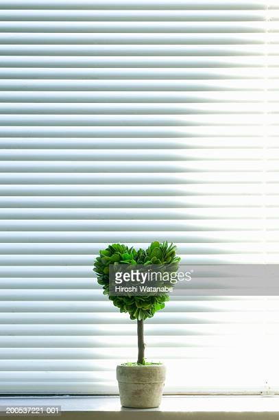 Heart-shaped plant in front of blinds