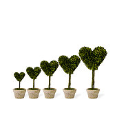 Heart-shaped potted plants in order of height