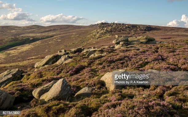 Heather moorland on Derwent edge, Peak District, England