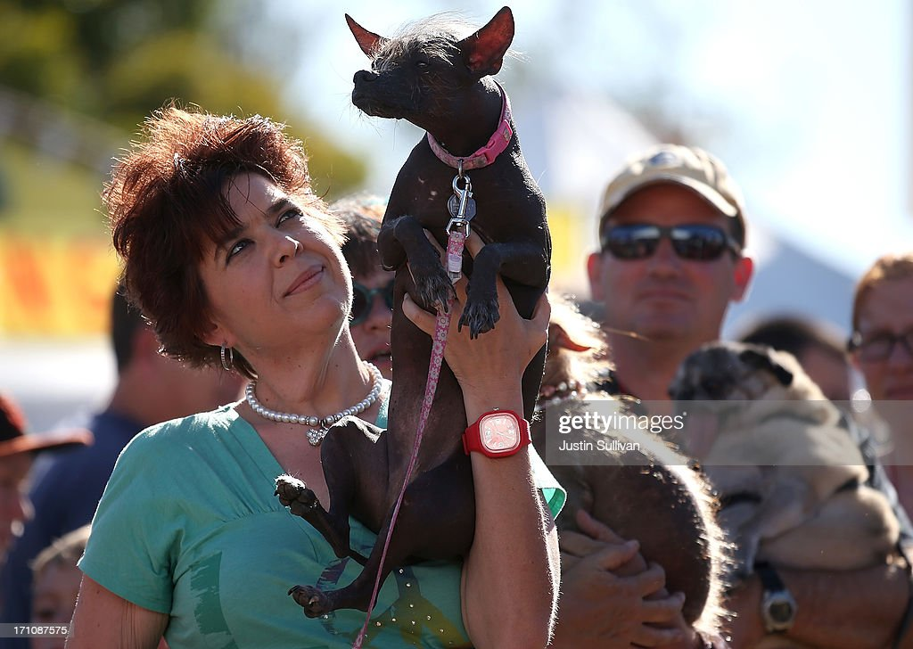 Heather Peoples holds her dog Cyndy Loo, a Chinese Crested, before the start of the 25th annual World's Ugliest Dog contest at the Sonoma Marin Fair on June 21, 2013 in Petaluma, California. Dogs from all over the country are competing for the honor of being the world's ugliest dog.